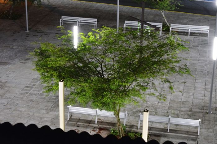 Tree Nature Outdoors PUERTO RICO 🇵🇷 Public Square Ciales Illuminated Night Cross
