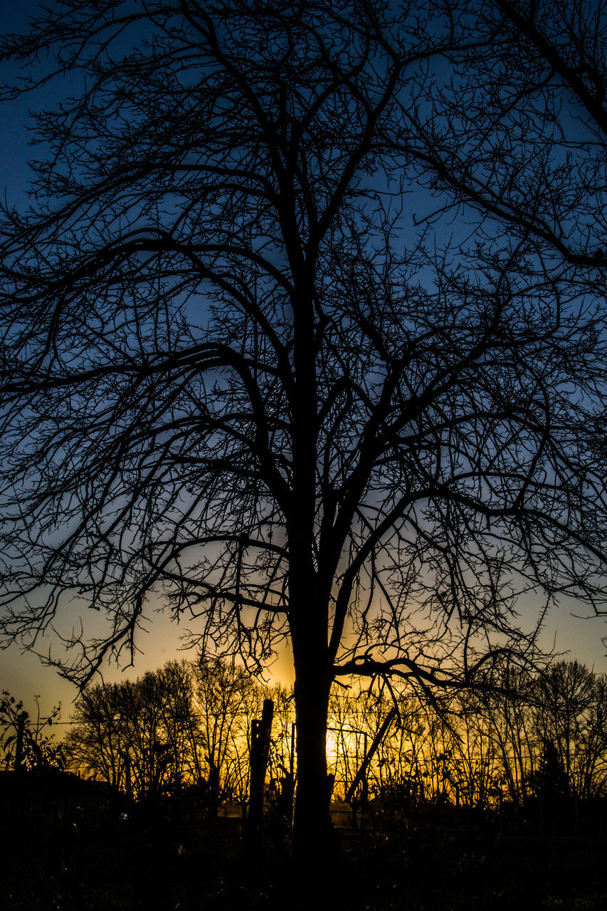 Silhouette Of Bare Tree At Sunset