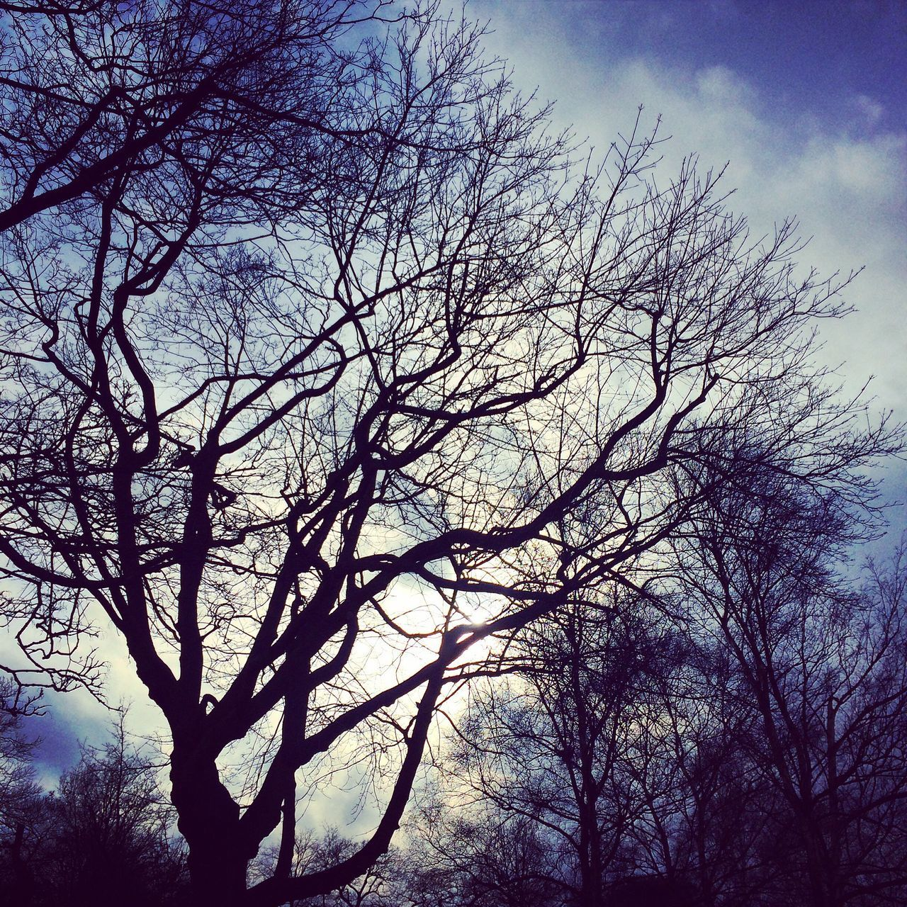 Trees Trees Beauty In Nature Silhouette Nature Outdoors Greenwich Park Greenwich,London Parklife Fresh On Eyeem