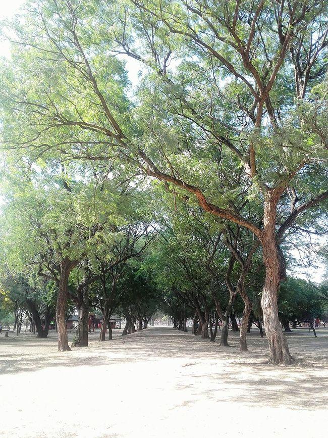 Maravillosa vista 🌲 Parque  Photography Maravillas De La Naruraleza Beautiful Bosque Like Airefresco