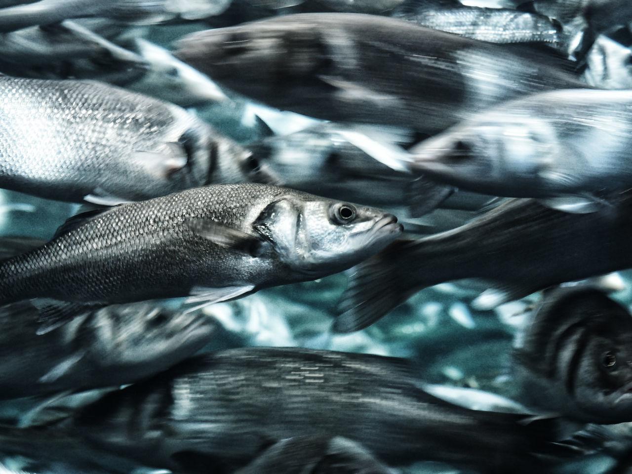 Animal Themes Aquarium Close-up Day Fish Fishs Freshness LoroParque No People Outdoors Teneriffa