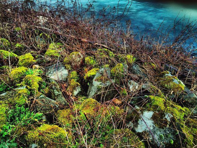Uferböschung Rheinimpressionen