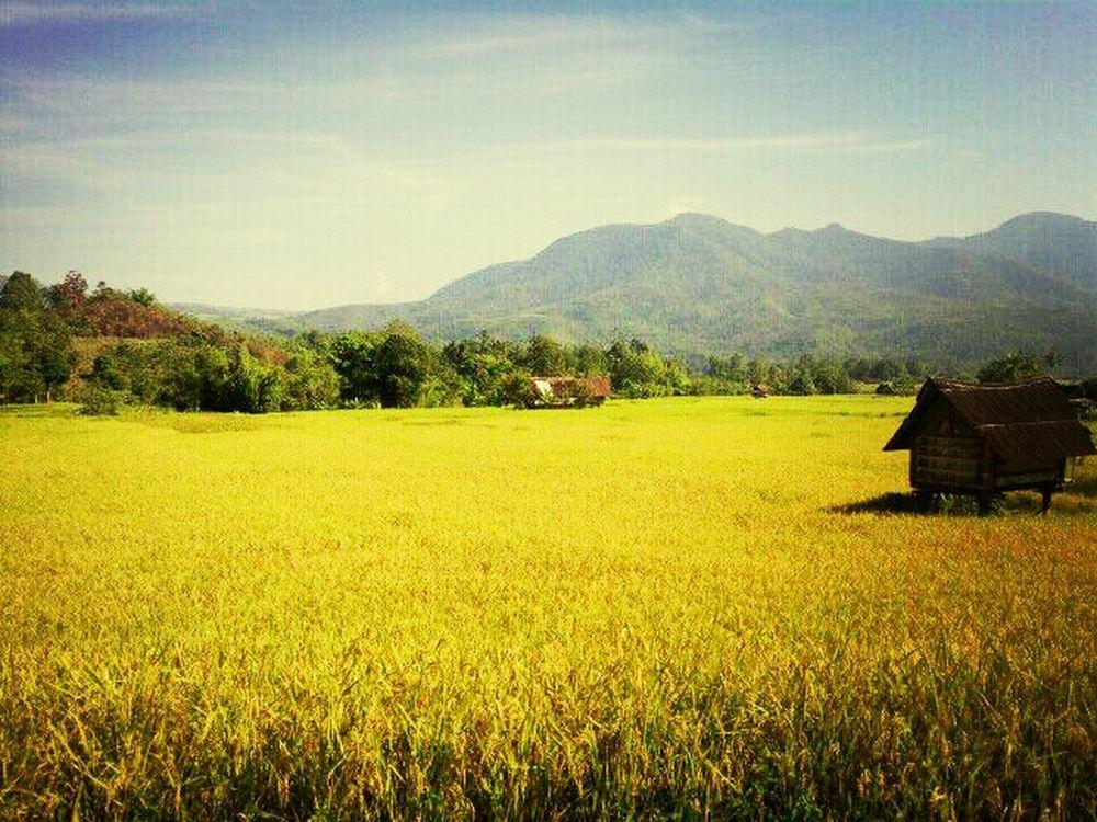 palembang village