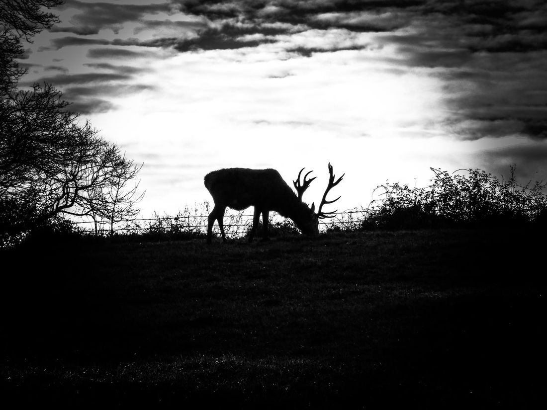 Silhouette Animals In The Wild Animal Wildlife Animal Themes Nature One Animal Sky Cloud - Sky Tree Full Length No People Mammal Outdoors Day Dramatic Sky Nature Eyeemgallery