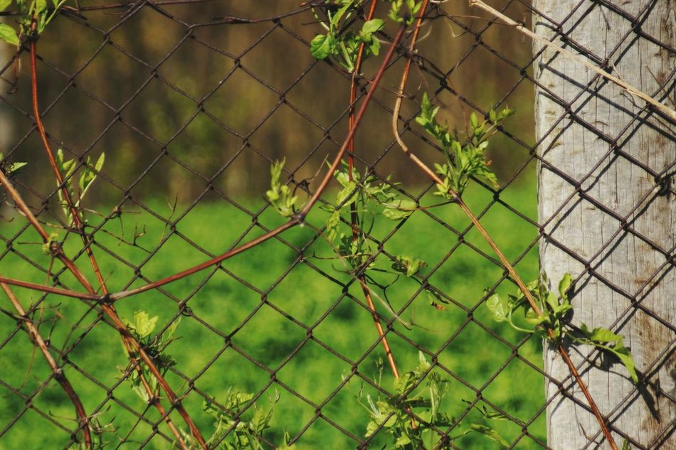 Fence Protection Security Safety Chainlink Fence Barbed Wire Metal Security System Prison Razor Wire Danger Military Outdoors Separation No People Day Trapped Prisoner Nature Grass Beauty In Nature Green Color Rural Scene Growth Landscape