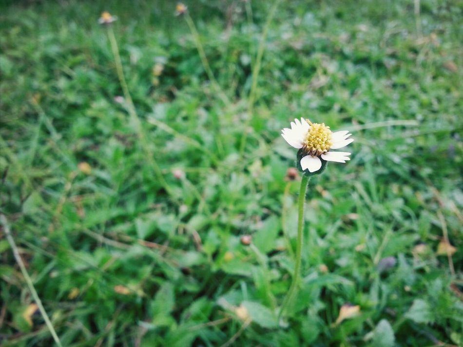 小黄花 Flower Whenntgcandescribestresslevel