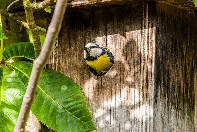 At home Animal Bird Birdwatching Birds