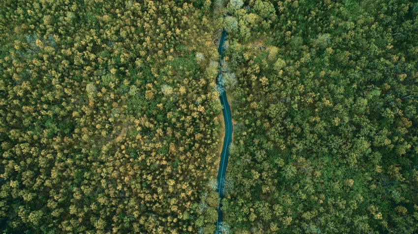 Perspectives On Nature Take a minute of your time to gaze at this... 🌳🇲🇺 #breathtaking #landscape #nature #bliss #aerial #view #greenery #Mauritius #dji #p4 #nature #greenery #environment #road #roadtrip #forestlike #beautiful #scenery #aerialview dronemagic trees awesomeview paradiseisland mauritius ilemaurice Rethink Things