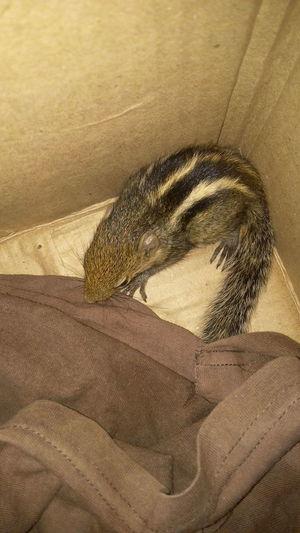 NoEditNoFilter Squirrel Squirrel Baby Adopted❤ For Treatment Cuteipie ❤ EyeEm Diversity EyeEmNewHere