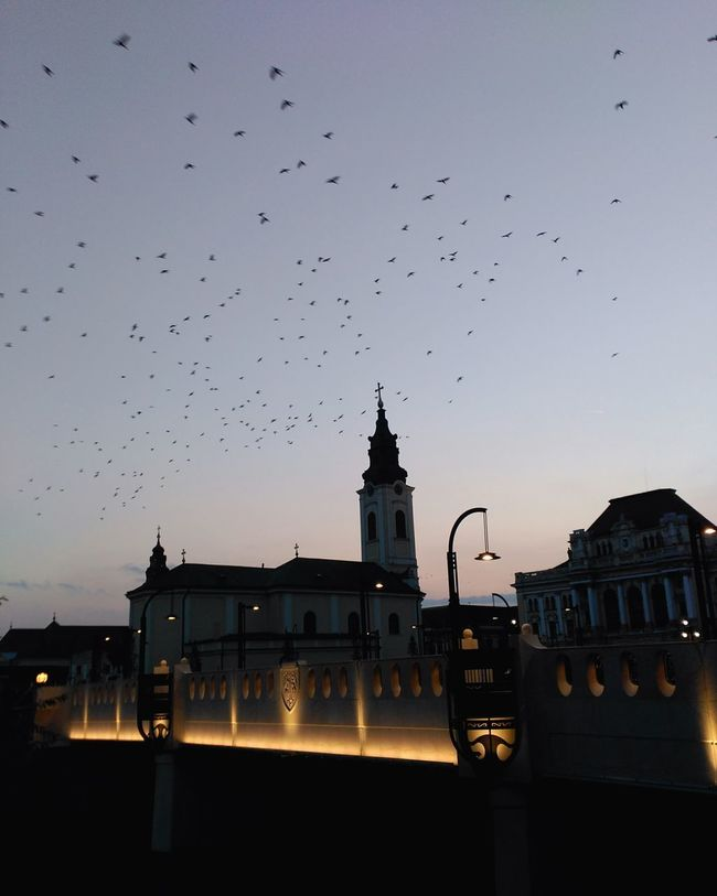 Birds flying over the city. Architecture Built Structure Building Exterior Illuminated Sky History Old Town Outdoors Cloud - Sky Flying City Life Façade Discover Your City EnjoyYourCity Birds