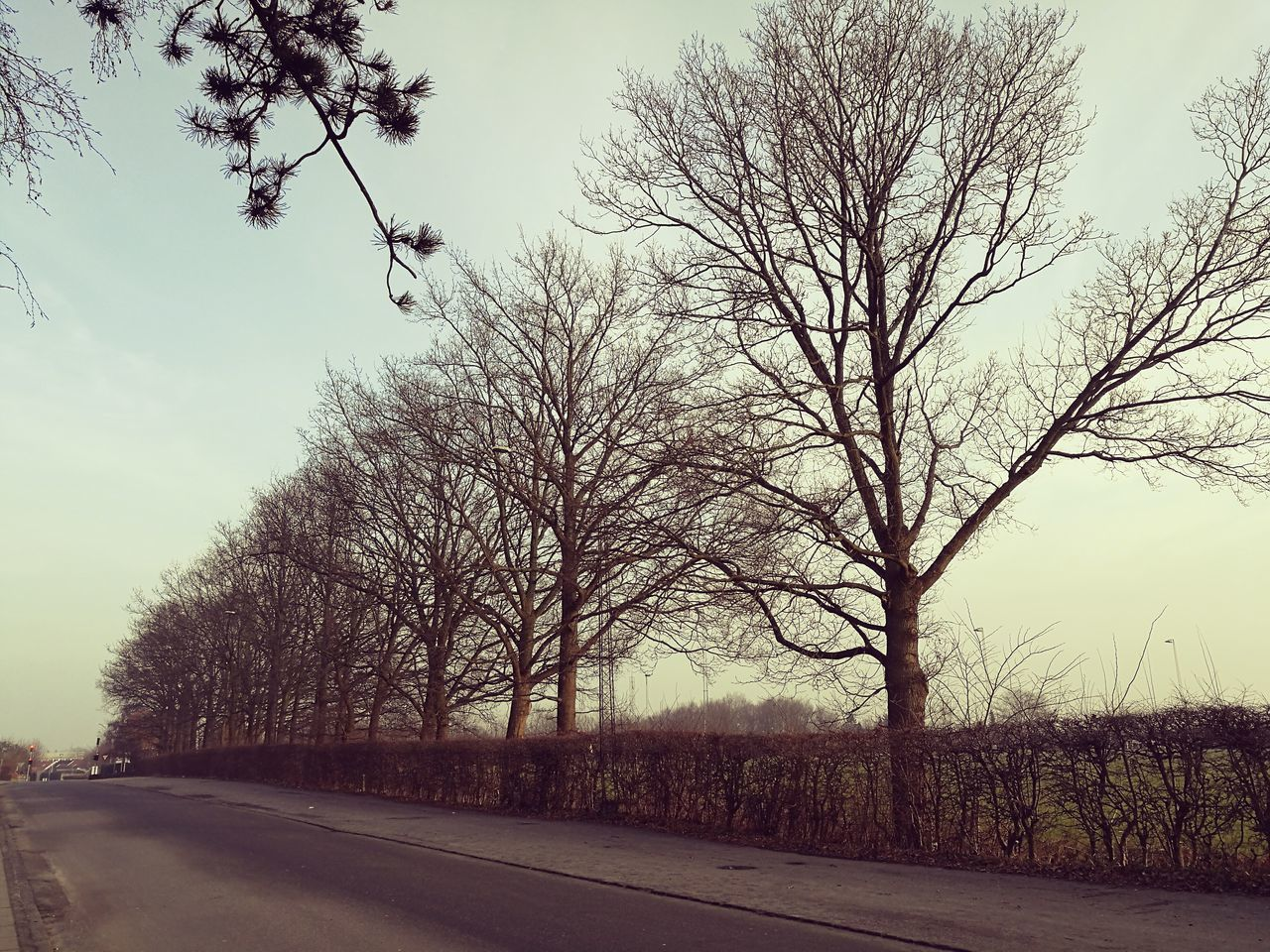 Nudetress No People Outdoors Day Taken With The Huawei P9 Sønderborg Denmark Winter Trees Winter 2017 Adapted To The City EyeEmNewHere The Great Outdoors - 2017 EyeEm Awards