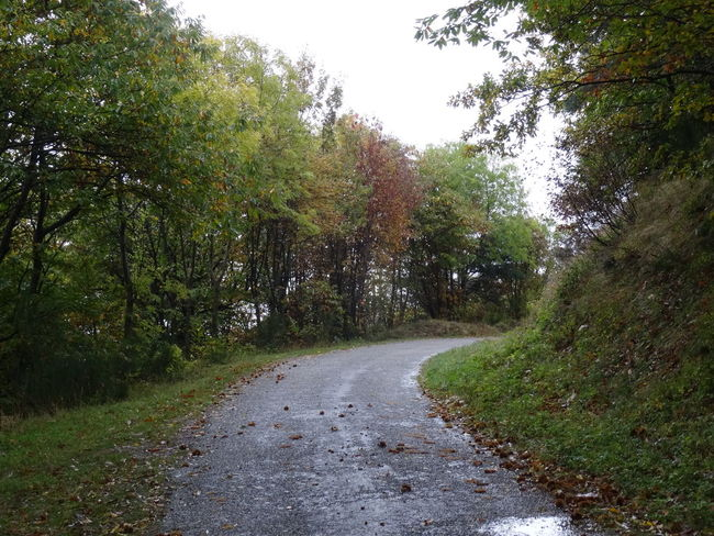 Tree Nature The Way Forward Green Color Growth Road No People Wet Day Beauty In Nature Outdoors Grass Scenics Water Sky Autumn Fog Ardeche