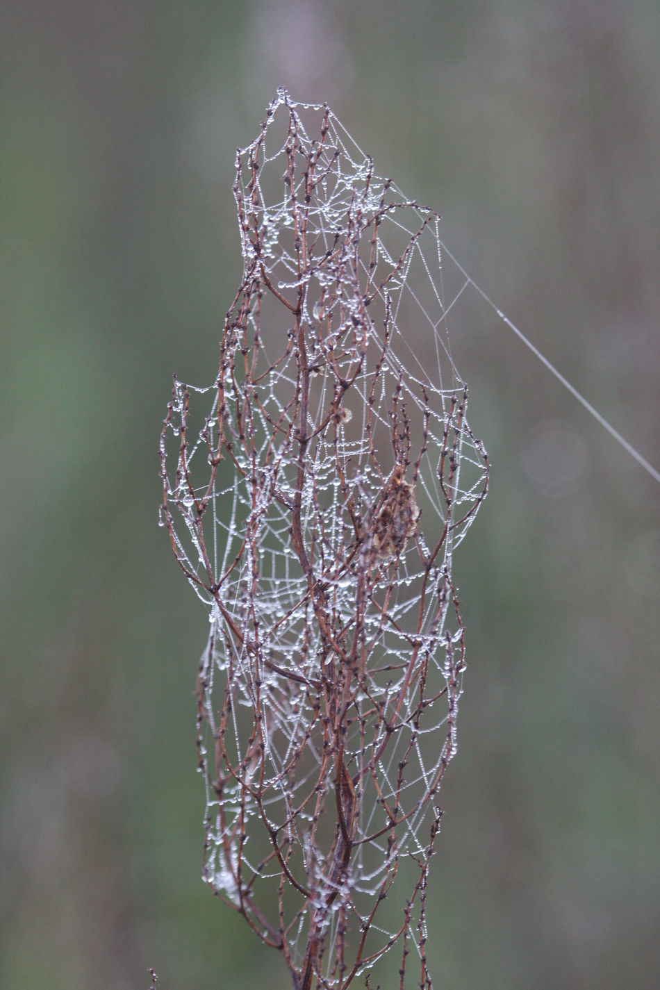 Animal Themes Beauty In Nature Close-up Complexity Deadly Drop Focus On Foreground Fragility Nature NO FLY ZONE Outdoors Spider Spider Web Trap Web