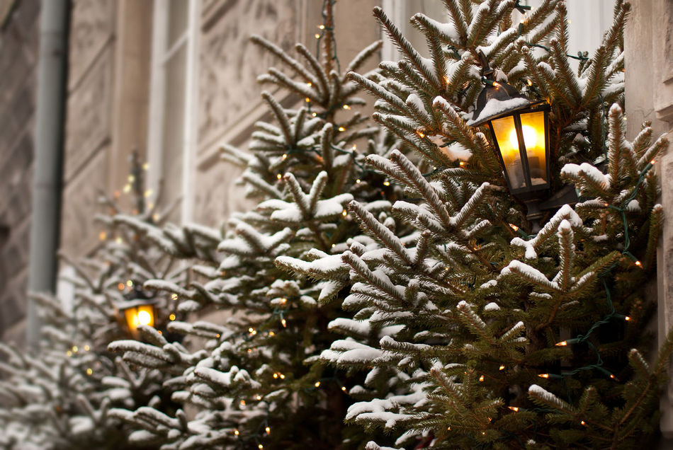 Christmas trees lamp lights outdoor decoration in Warsaw, Poland. Trees decorated in lighting chains for Xmas Eve night, exterior in horizontal orientation, nobody. Christmas Christmas Decoration Christmas Lights Christmas Lights Christmas Ornament Christmas Tree Decoration Illuminated Lamp Lamps Lantern Lanterns Lighting Lights No People Outdoors Snow Spruce Trees Winter Winter Xmas Xmas Decorations Xmas Time Xmas Tree