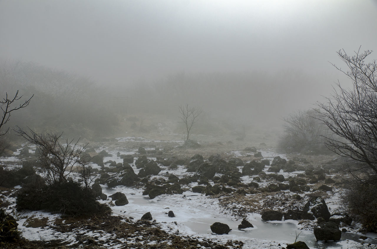 Beauty In Nature Cold Temperature Fog JEJU ISLAND  Mt. Halla Nature Snow Snowing Tree Winter