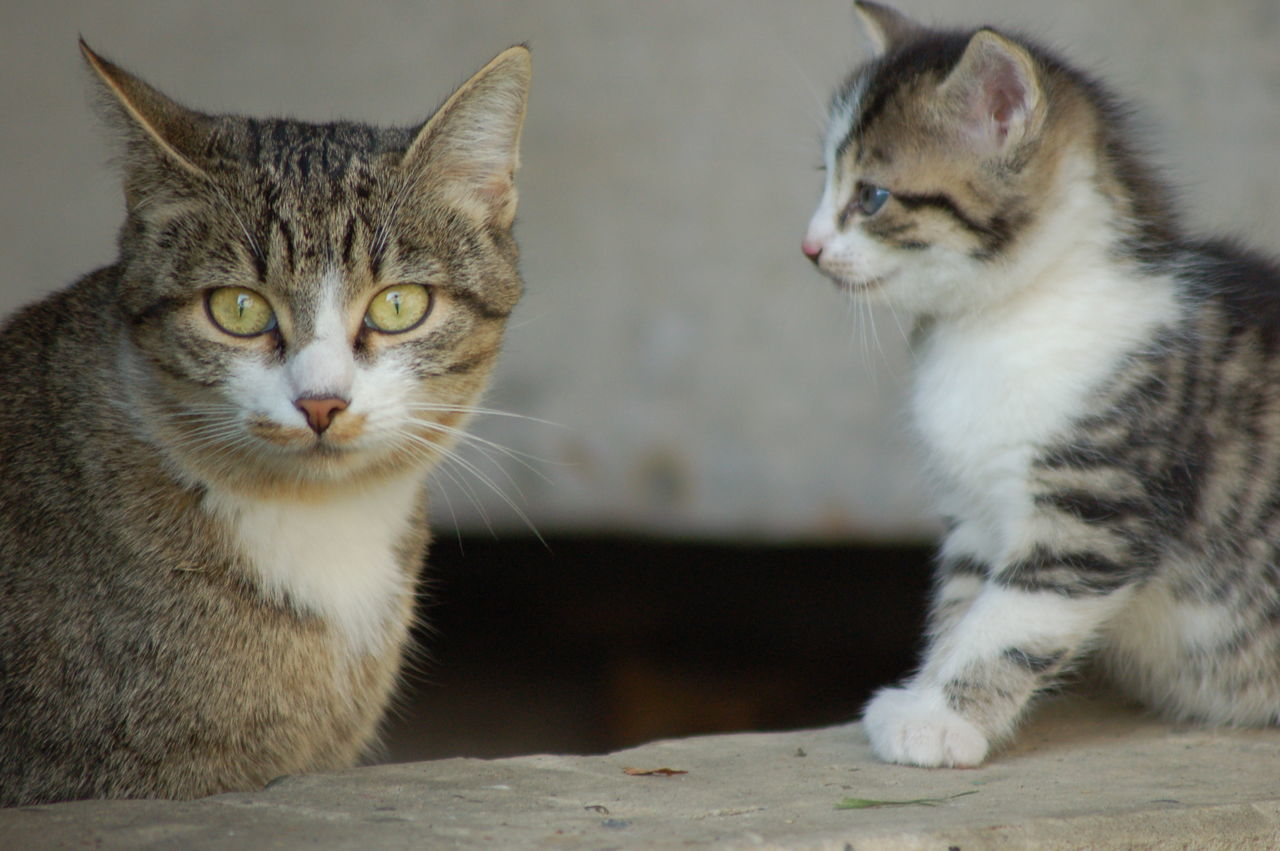 Babycats Cat Cateyes Curiosity Curious Cat Feline Kids Kiss Kitten Kittens Kittens Kitten Kitty Feline Cat Cats Let Lookingup Meow Playing Small Cat