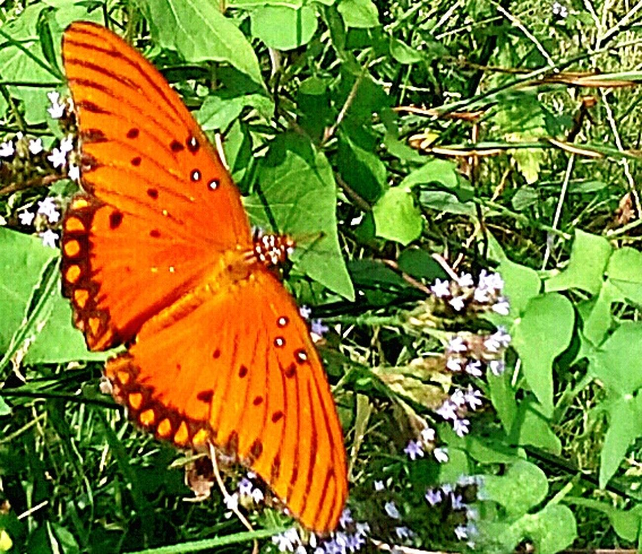 Texas Check This Out Nature Wild Somerville Photo Savage Light And Shadow Mariposa