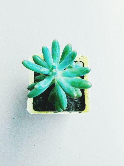 多肉植物 First Eyeem Photo