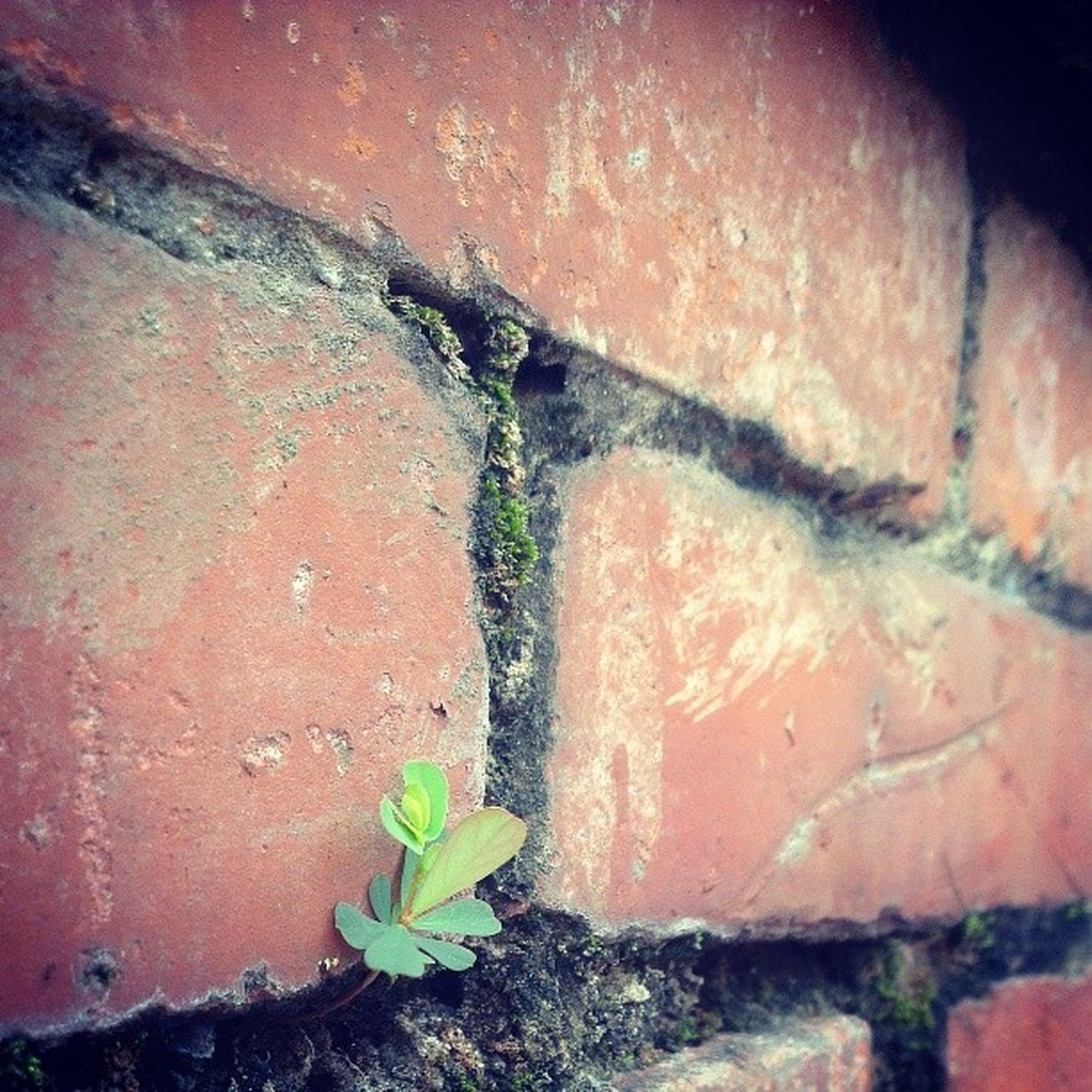 wall - building feature, weathered, built structure, architecture, old, plant, abandoned, damaged, deterioration, wall, run-down, bad condition, obsolete, close-up, brick wall, growth, building exterior, rusty, no people, leaf