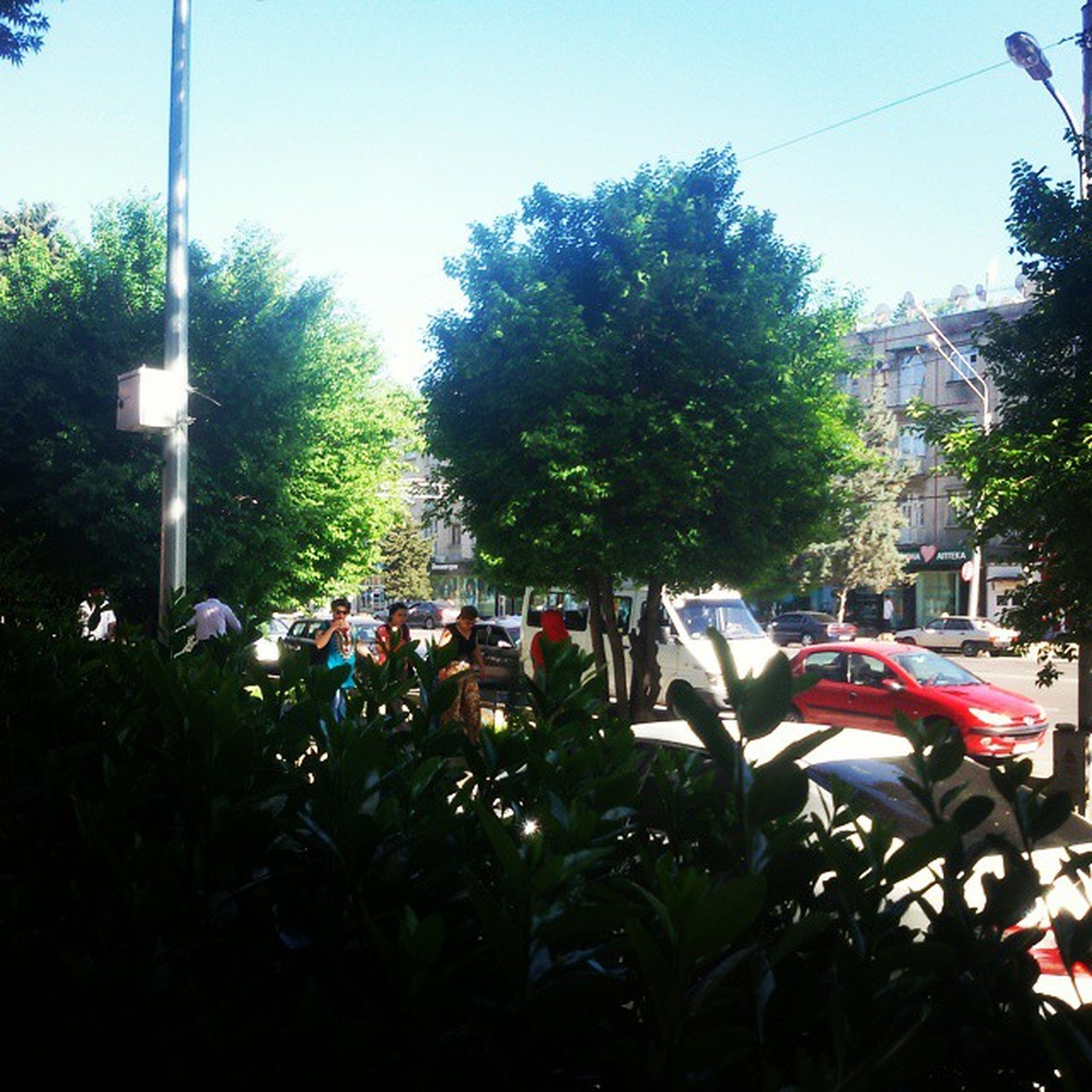 tree, clear sky, large group of people, transportation, land vehicle, men, mode of transport, car, growth, person, street, lifestyles, sunlight, leisure activity, sky, plant, outdoors, day, city