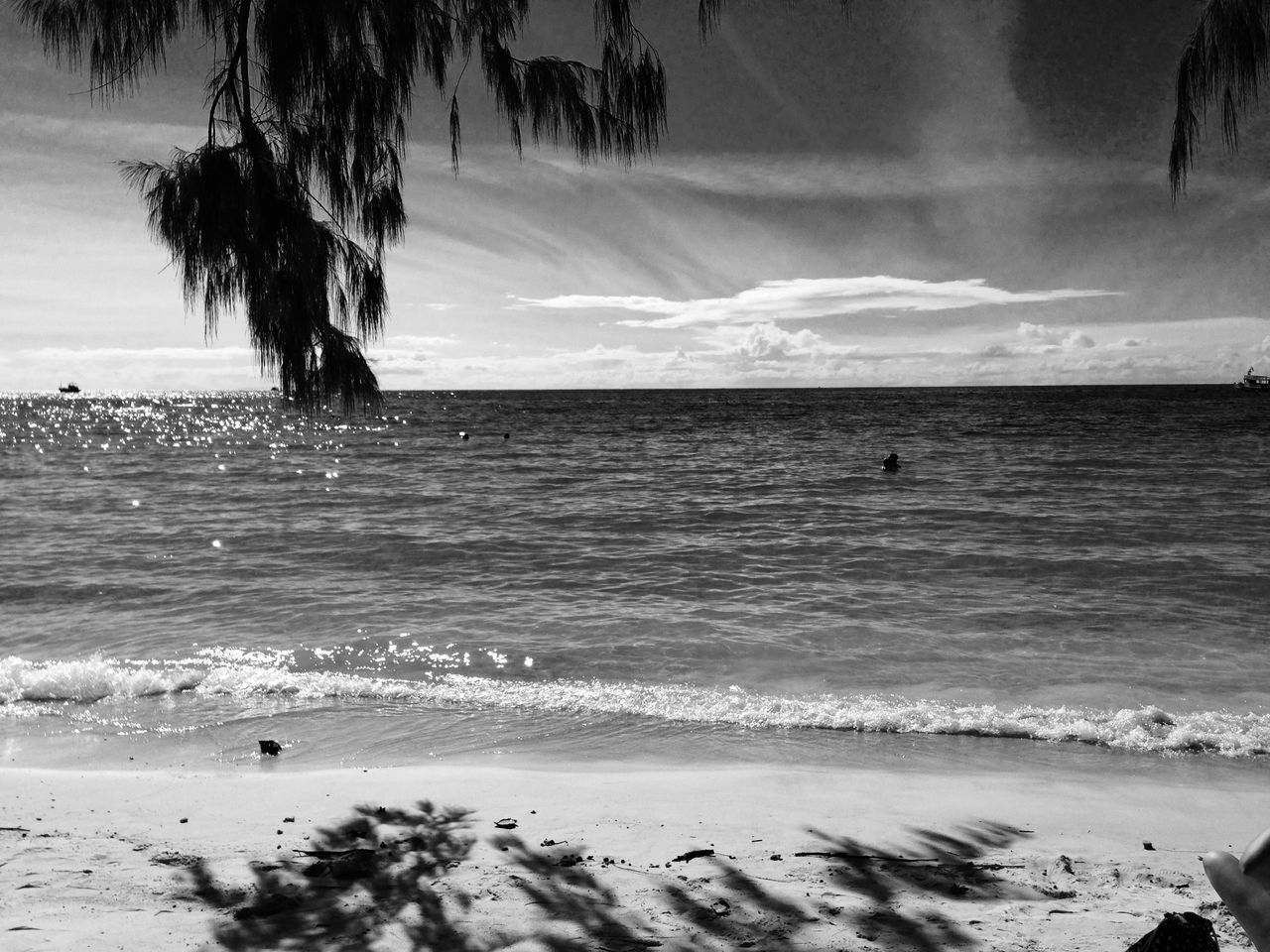 sea, beach, nature, beauty in nature, tree, water, scenics, horizon over water, wave, tranquility, sky, tranquil scene, outdoors, sand, day, no people, palm tree