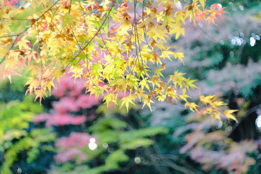 『15:12:39』 2016-12-02 Nature Leaf Growth No People Plant Close-up Day Beauty In Nature Outdoors Biology Fragility Animal Themes Yellow Beauty Winter Hello Word