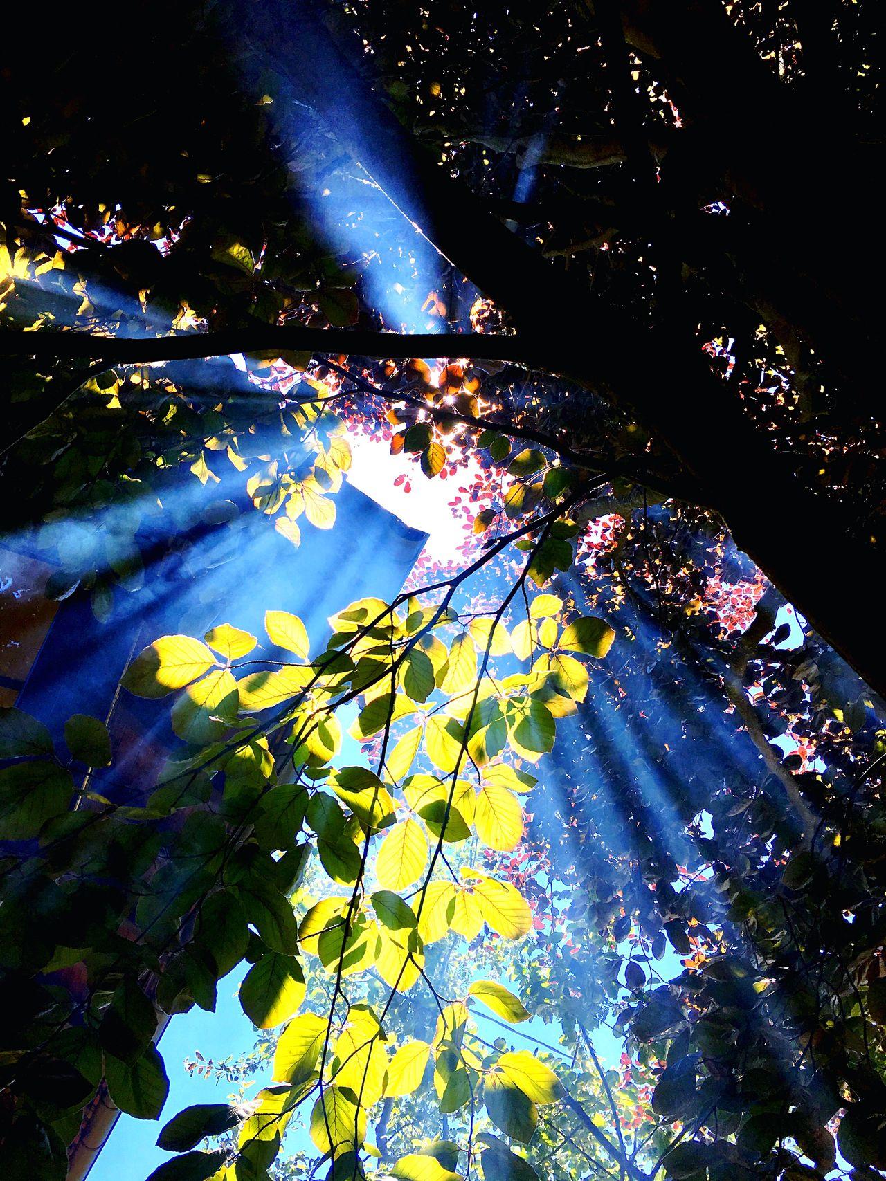 Beauty In Nature Nature Smoke Outdoors Tree No People Flower Branch Sky Sun Tranquil Scene Eyeemphotography IPhoneography EyEmNewHere Eyeem Market EyeEm Gallery Eyemphotography EyeEm Best Shots The Week On Eyem Sunlight Nature EyeEmNewHere Eyem Best Shot - My World