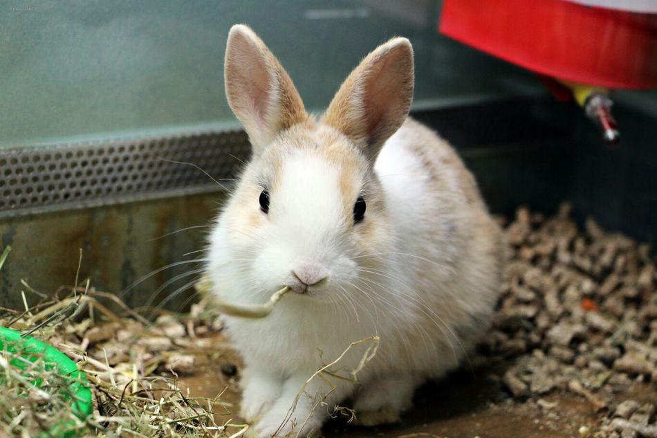 Beautiful stock photos of rabbit, Alertness, Animal Head, Animal Themes, Close-Up