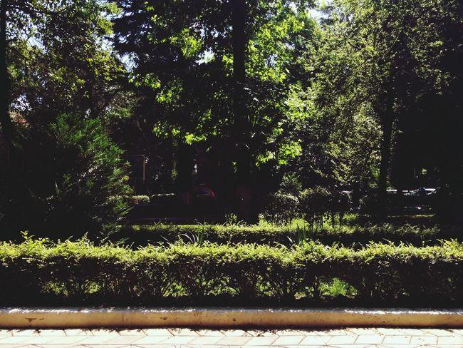 Summer Joyful Relax Park
