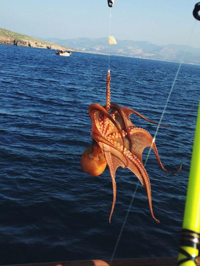 octopus 🐙 First Eyeem Photo