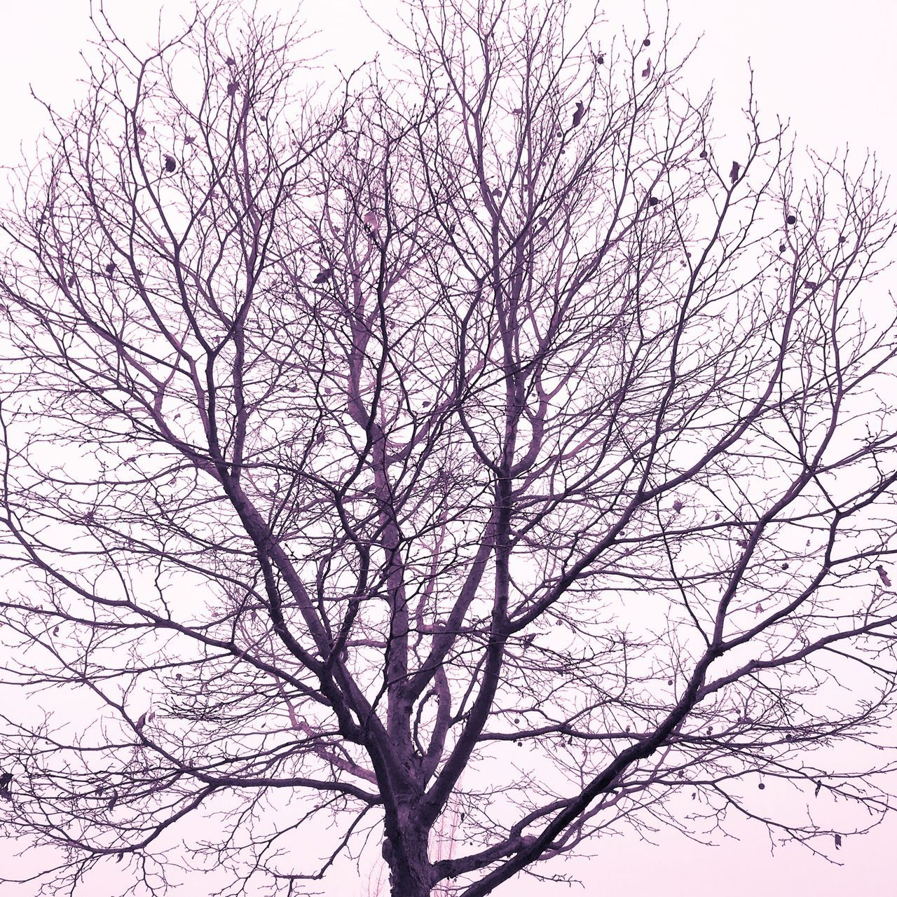 bare tree, branch, nature, beauty in nature, low angle view, tree, tranquility, no people, sky, outdoors, clear sky, scenics, day