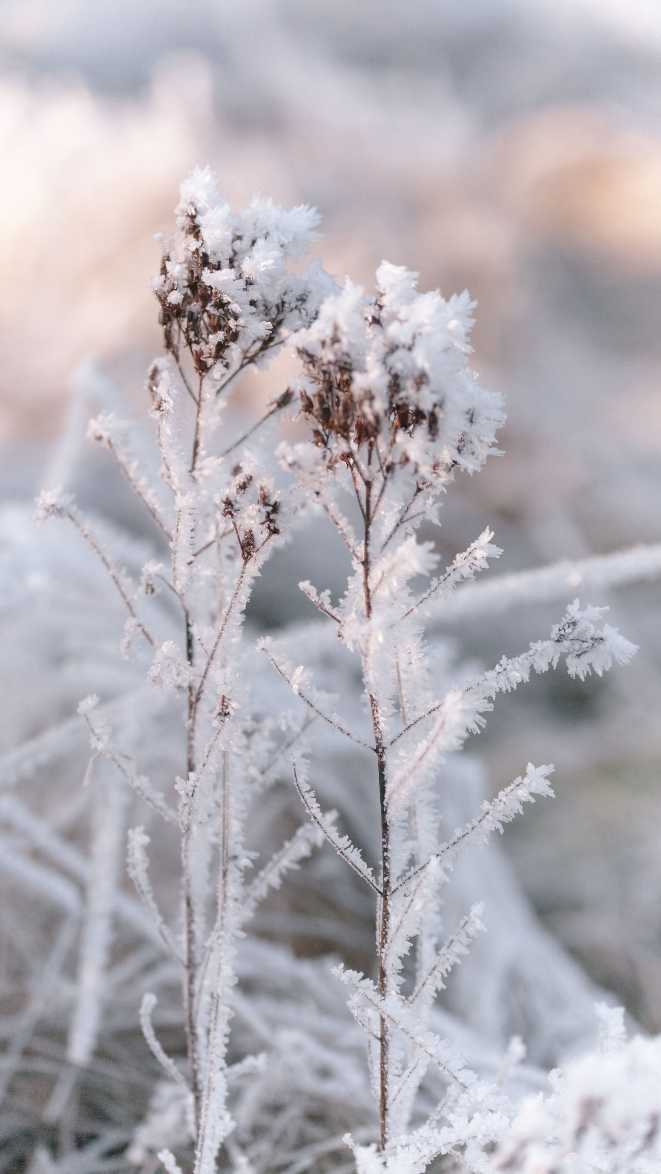 🌱❄️ 16x9 Beautiful Nature Blizzard Close-up Cold Days Cold Temperature EyeEm EyeEm Gallery EyeEm Masterclass Fragility I LOVE PHOTOGRAPHY Ice Macro Meadow Nature Nature Nature On Your Doorstep Nature_collection Plants Silence Simple Quiet Love Tranquility Winter Wintertime Winterwonderland