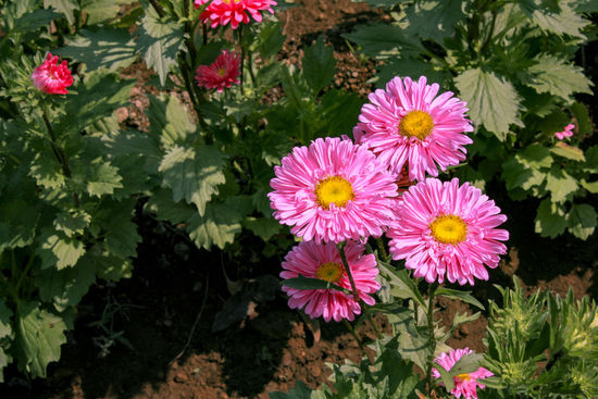 Flower Pink Color Plant Nature Growth Flower Head Outdoors Petal Freshness No People Beauty In Nature Leaf Fragility Multi Colored Close-up Day Summer Photography Be. Ready.
