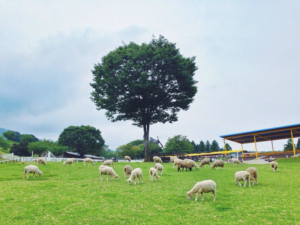 EyeEm Best Shots Sheep Nature Landscape The Places I've Been Today