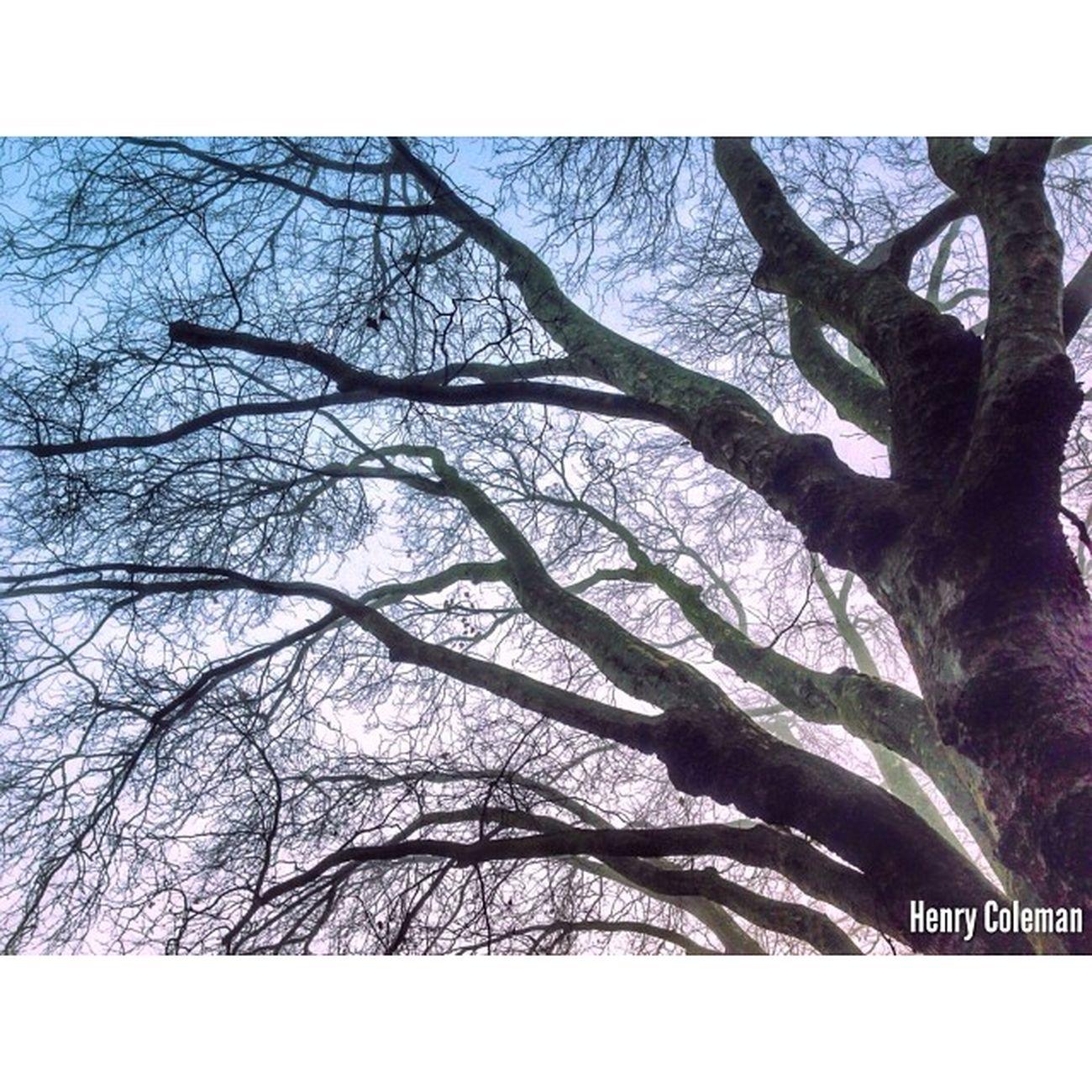 """Knocking on the Sky"" London London_only Londonpop Udog_edit Ig_europe Ig_exquisite Udog_peopleandplaces Shotaward Squarevision Icu_britain The_photographers_emporium Udog_nature Udog_sky"