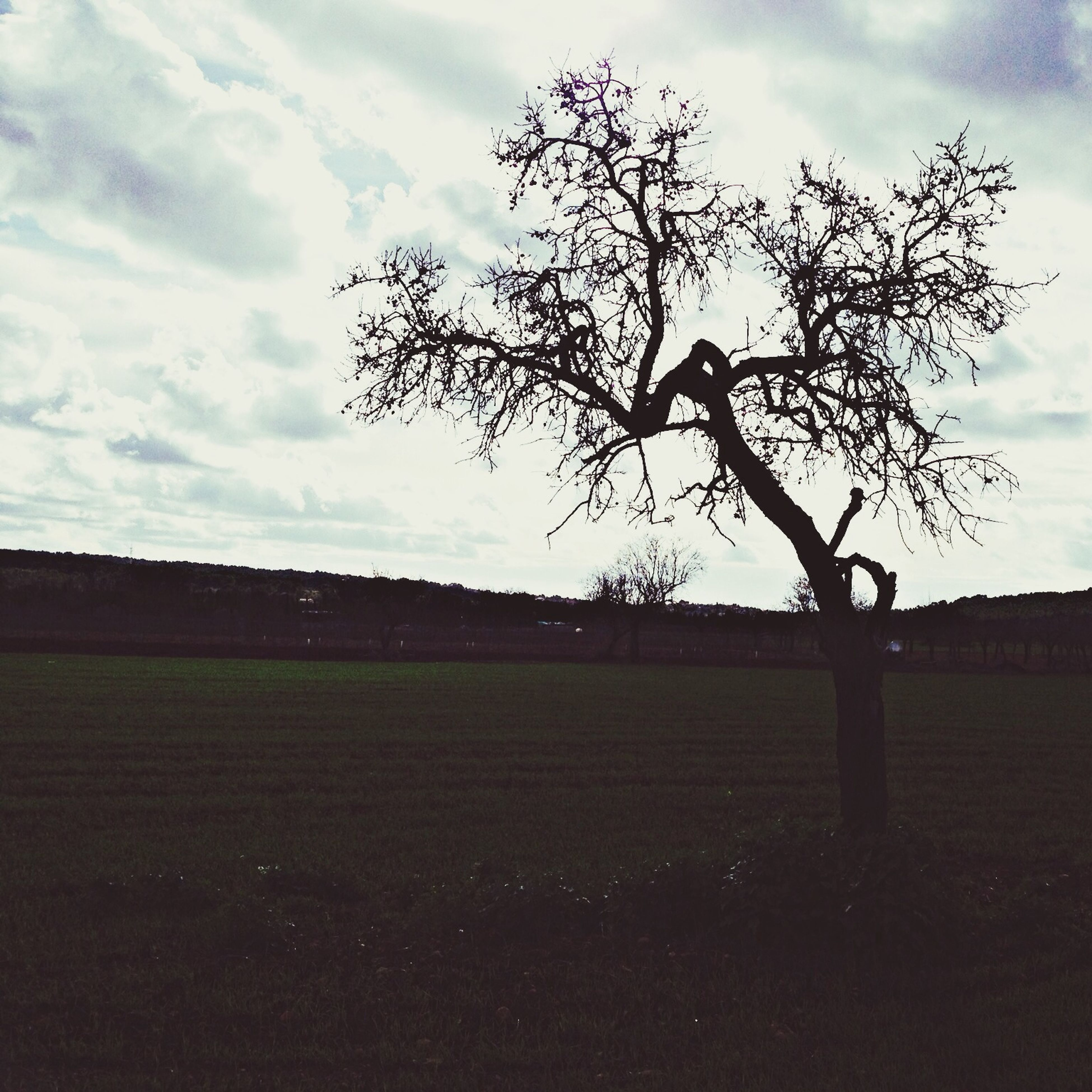 sky, landscape, field, tree, tranquility, tranquil scene, bare tree, grass, cloud - sky, cloud, nature, scenics, branch, beauty in nature, grassy, rural scene, growth, cloudy, silhouette, no people