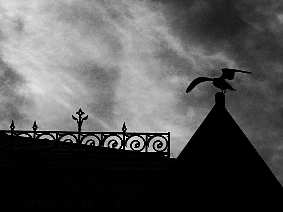 Gothic Morning Silhouette Sky Outline Amazinganimals Atmospheric Moody Bird Gothic Style Light And Shadow Noir Blackandwhite Photography Artphotography Moment