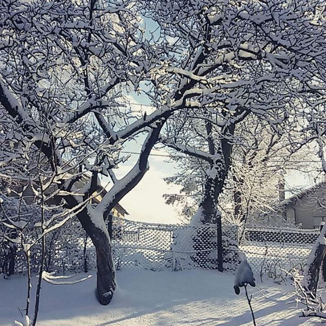 tree, snow, winter, cold temperature, branch, bare tree, nature, animal themes, no people, one animal, dog, outdoors, mammal, day, beauty in nature