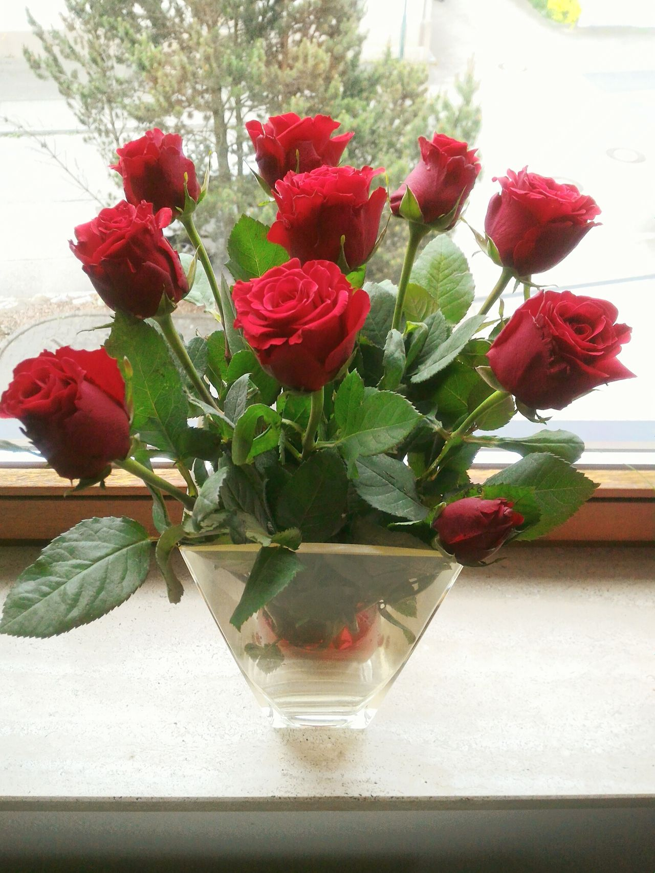 Roses Redroses Flowers Beautifulthings Legend Famous Thorns🌹 Valentine Romantic