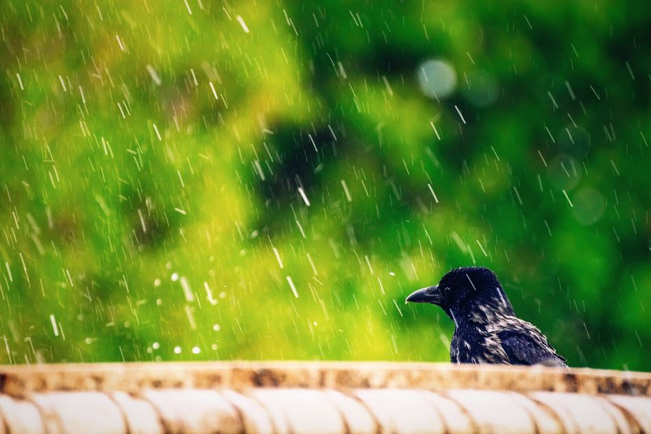 Beautiful stock photos of rain, Animal Themes, Animals In The Wild, Austria, Day