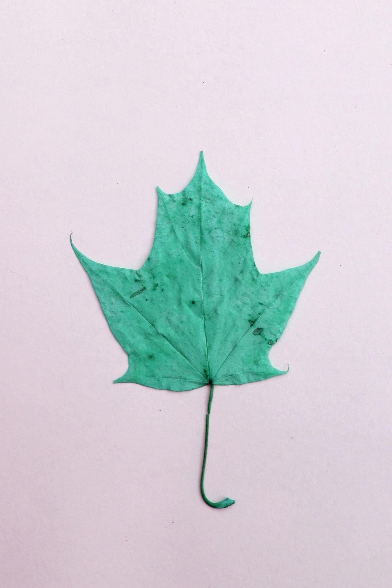 Blue Blue Color Blue Leaf Blue Leafs Blue Leaves Color Flour Inspiration Leaf