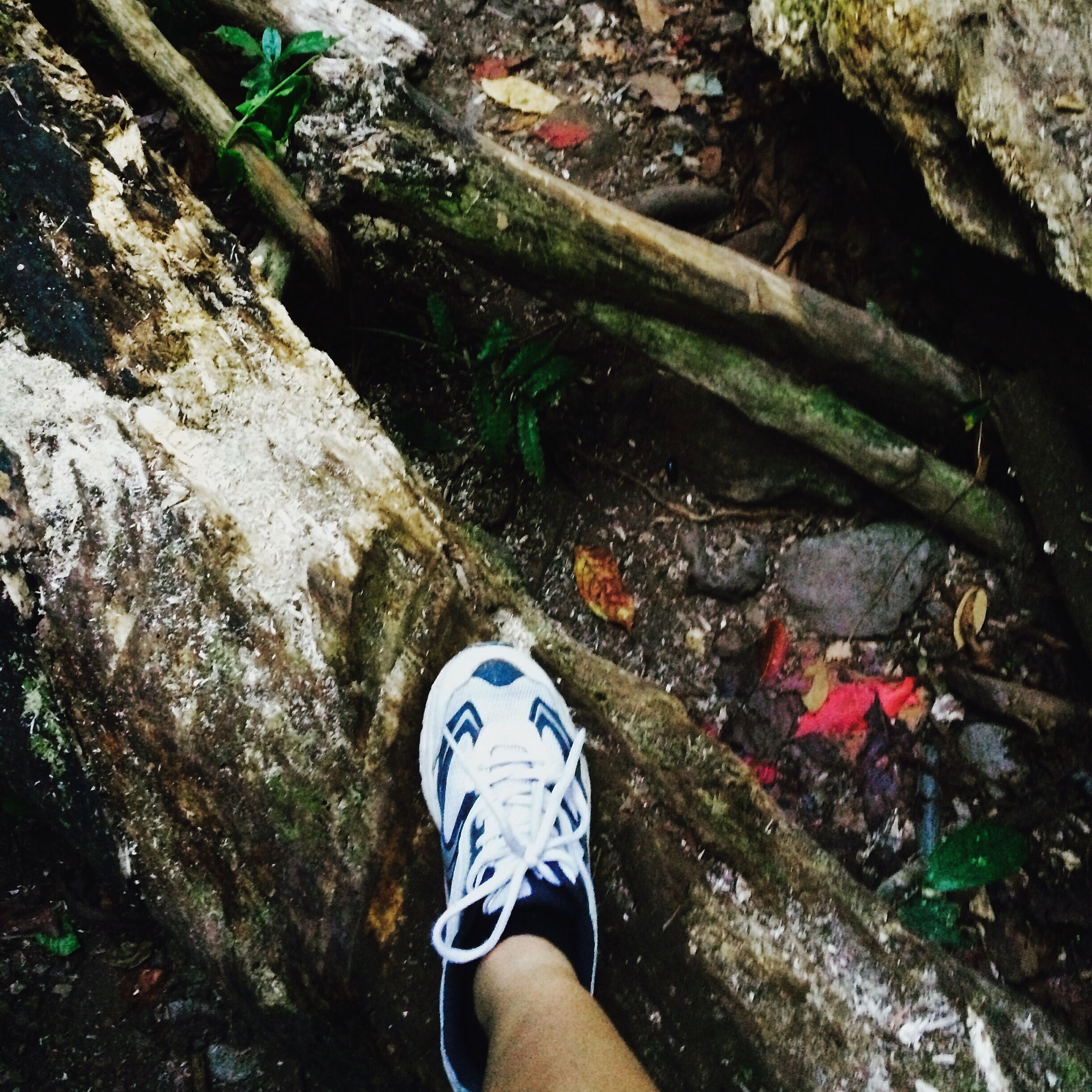 lifestyles, leisure activity, low section, standing, person, personal perspective, shoe, tree, men, casual clothing, rock - object, high angle view, unrecognizable person, forest, day, outdoors, nature