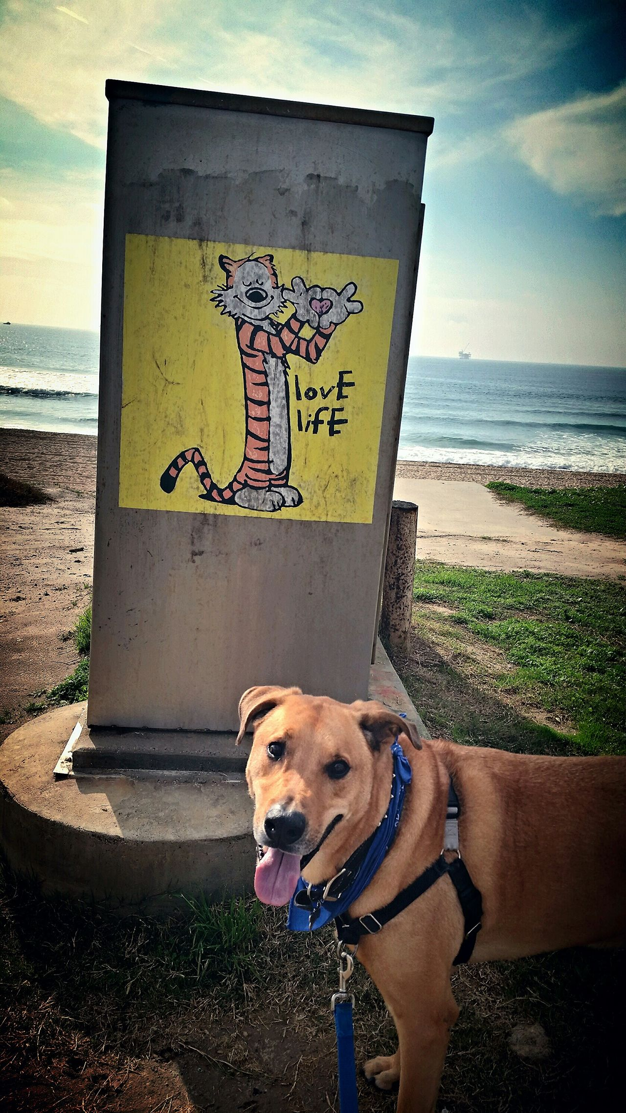 """If good thjngs lasted forever, would we appreciate how precious they are?"" ~Hobbes Truth Hobbes Calvin And Hobbes Love Life Surf City USA Xephyr Cheesebro McIlrath"