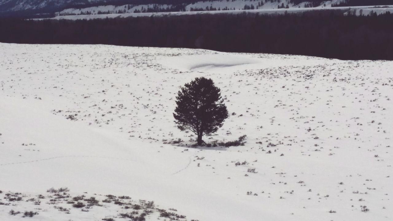 Lonely Tree Snow ❄ Melting Springtime Tracks Sagebrush