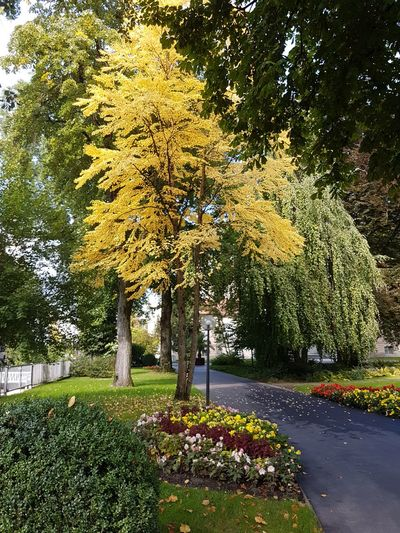 Tree Growth Flower Nature Beauty In Nature Yellow Park - Man Made Space Day Outdoors No People Grass Plant Fragility Freshness Sky Green Color Yellow Tree Calming Place