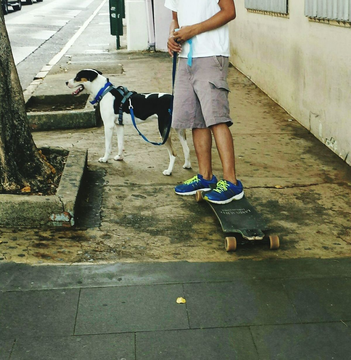 Urban Sports I Love My City Summer Views Streetphotography Captured Moment Skateboarding Summer Dogs Shoespotrait F2 Urban Lifestyle Adventure Buddies Mix Yourself A Good Time