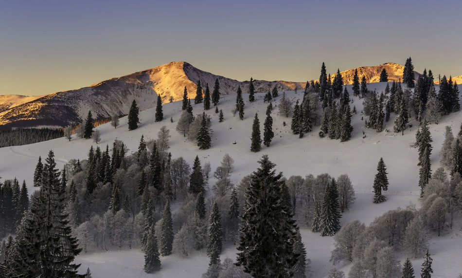Peaks on mountains, at sunrise Beauty In Nature Cold Temperature Day Forest Landscape Mountain Nature No People Outdoors Peak Pinaceae Pine Tree Pine Woodland Red Red Peak Scenics Sky Snow Sunset Travel Tree Winter