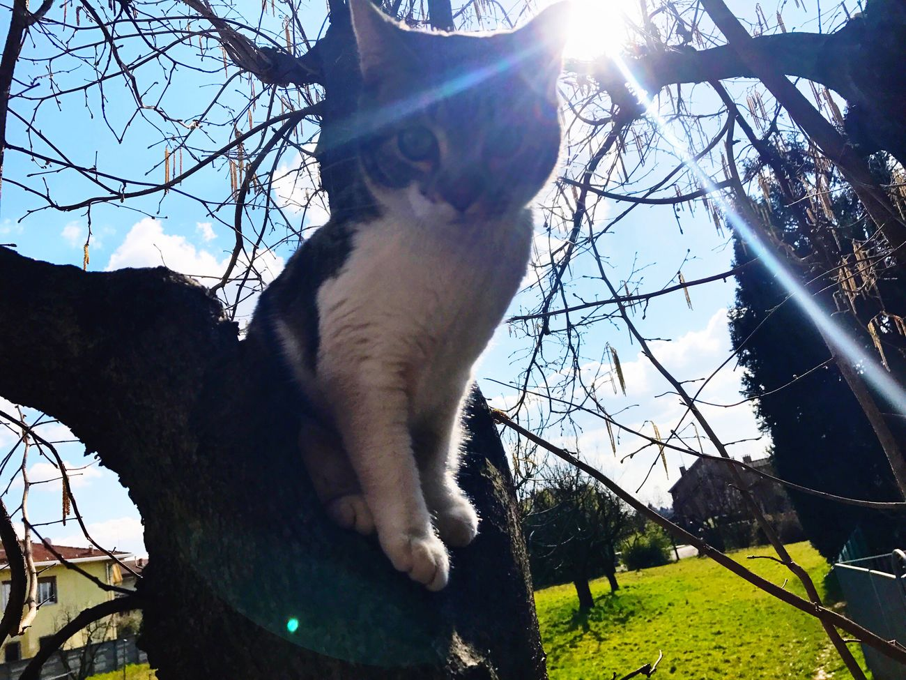 Pet Cat Tree Bare Tree Low Angle View Sky Domestic Animals Sun Clear Sky