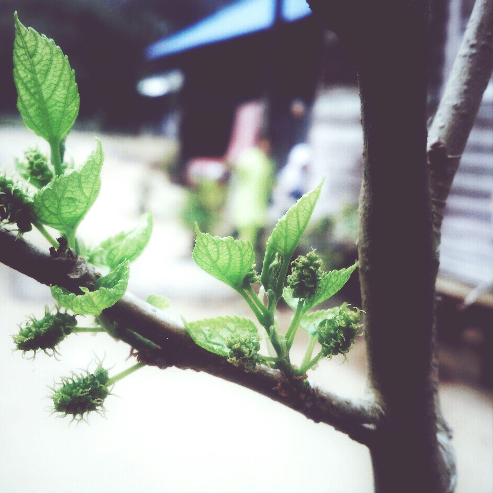 moning! Photooftheday Follow Me Green
