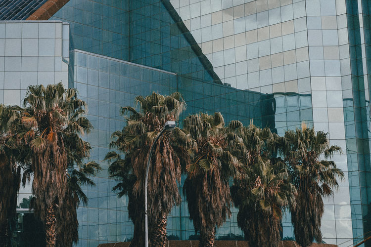 Reflection Architecture Building Building Exterior Built Structure Day Growth Nature No People Palm Trees Plant Summer Urban Urban Jungle